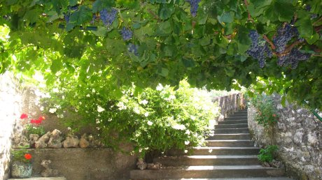 Grape vine shade Island of Korcula Croatia