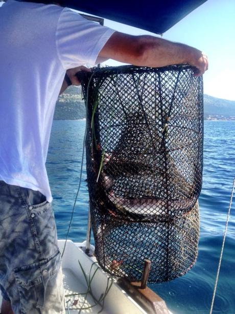 June 2013 - fishing at Korcula Croatia