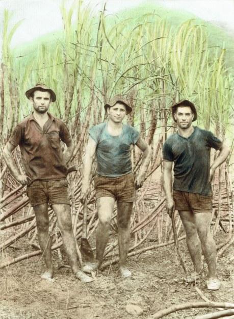 Ante Kustro - left - Steve Kustro's father at Australia's sugar cane fields Photo: Steve Kustro